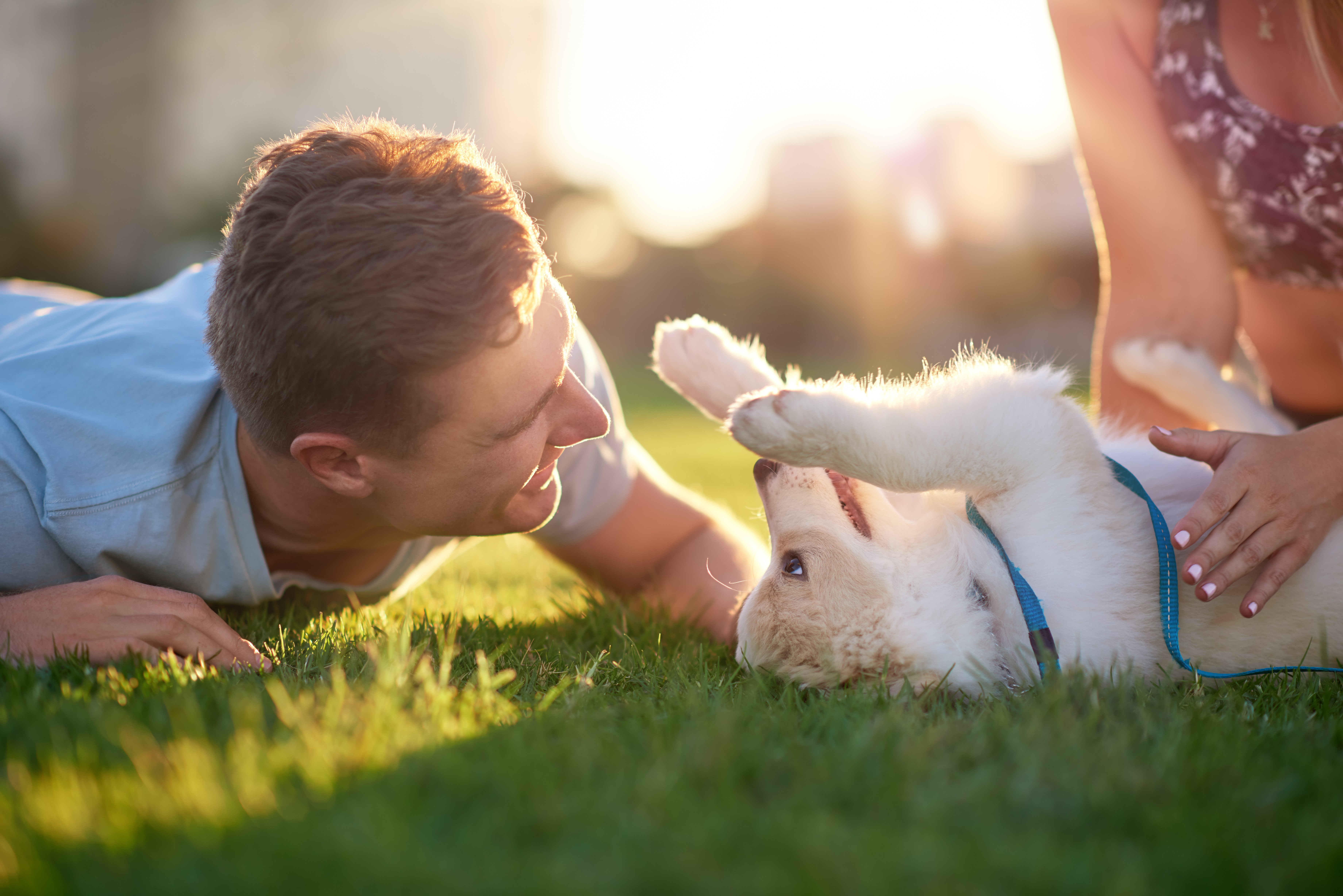 Settling in a new puppy advice by Animal Charity
