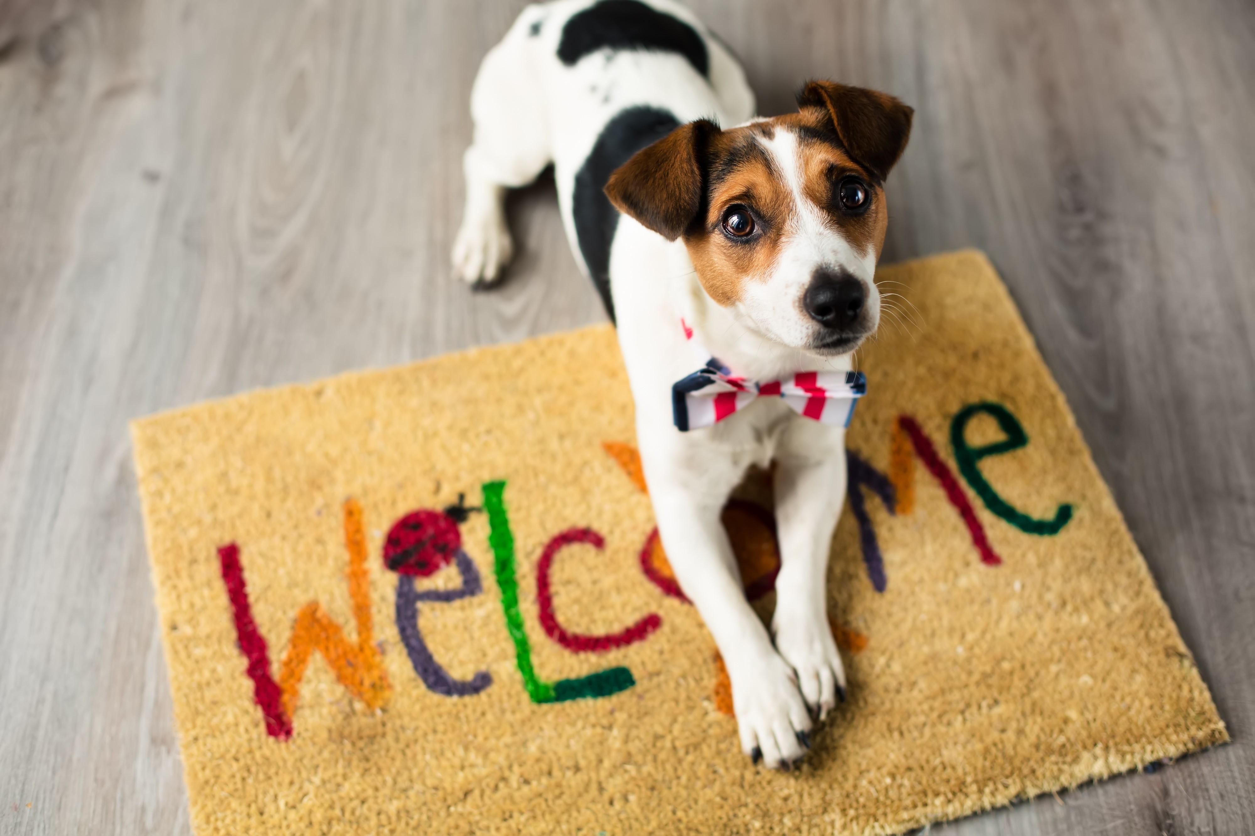 Adoption process at Warrington Animal Welfare