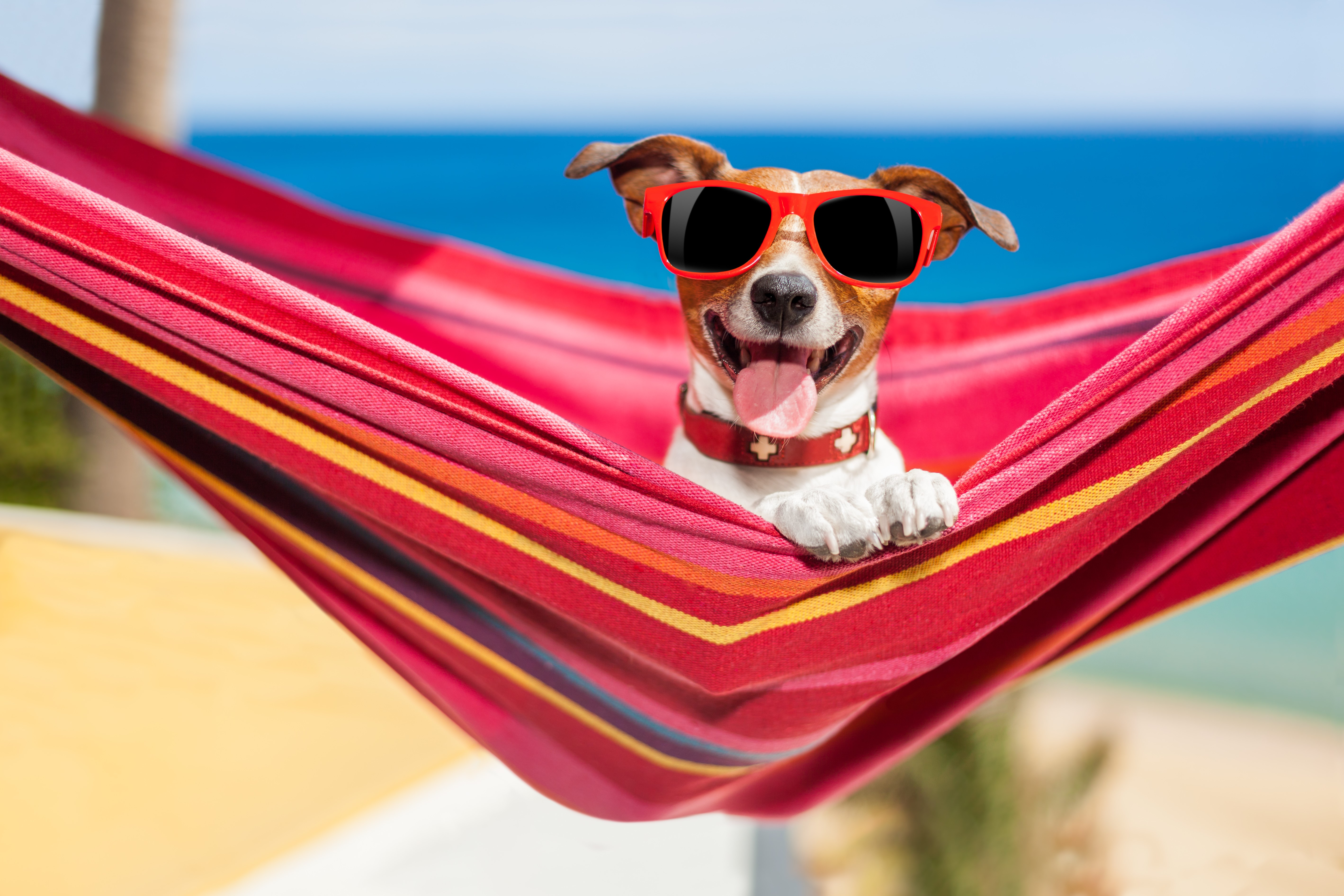 summer and winter care for Cats & Dogs