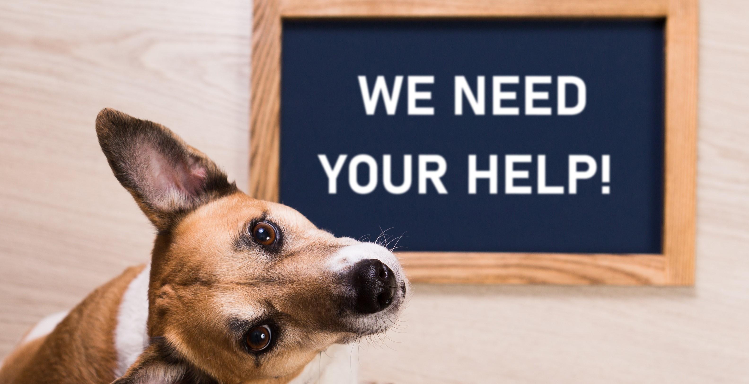 Corporate involvement with Warrington Animal Welfare
