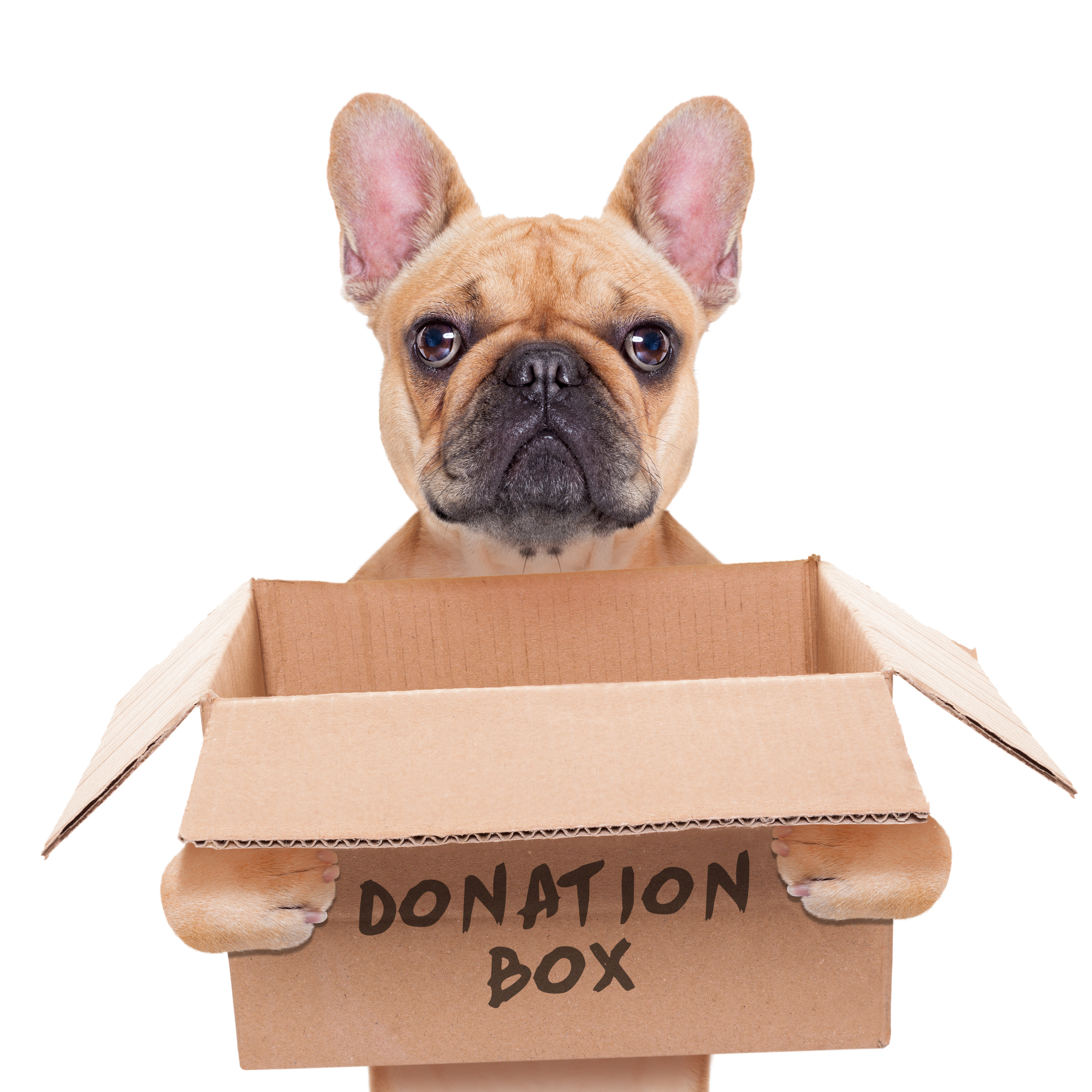 Animal charity food and items donations