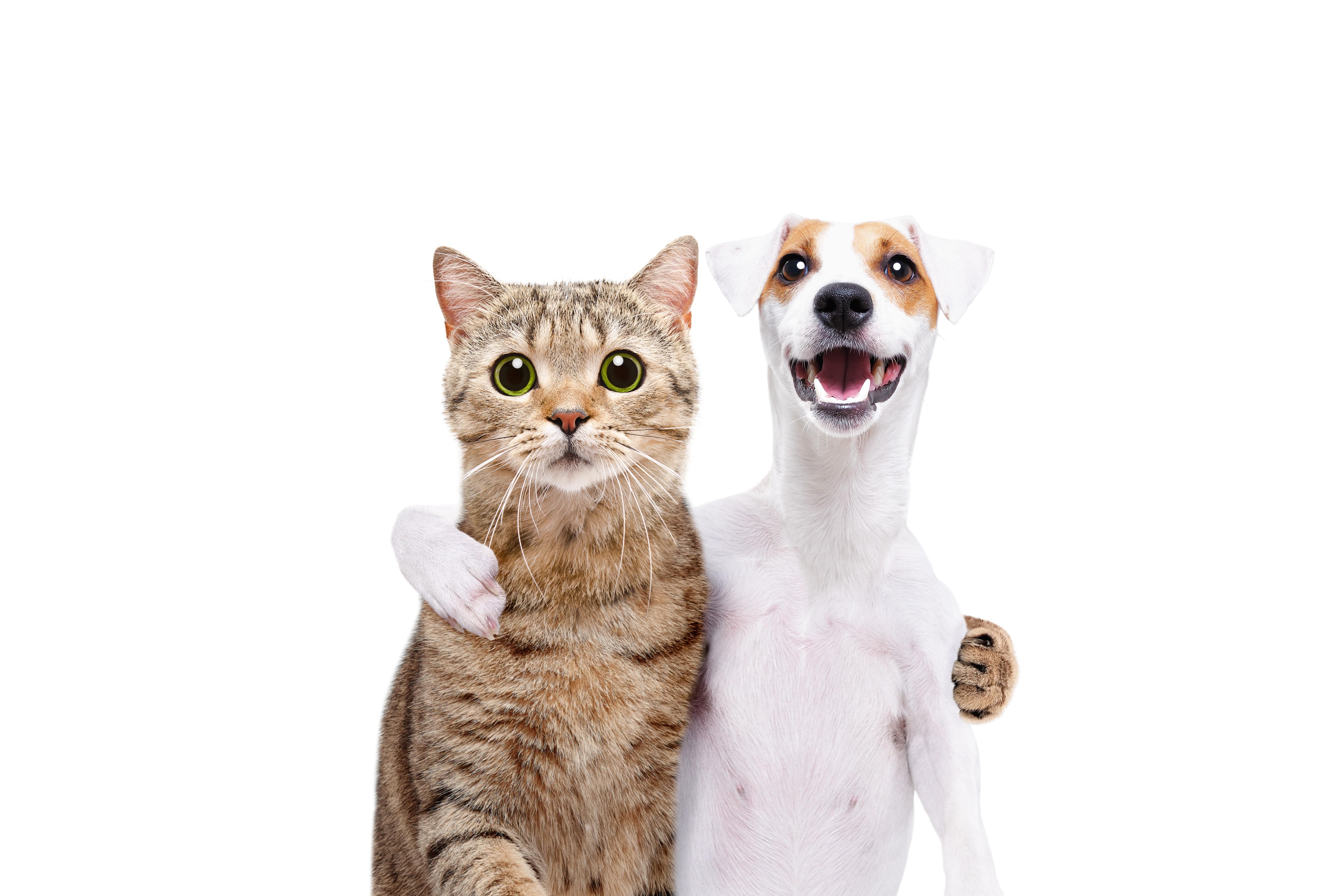 become a Friend of Warrington Animal Welfare