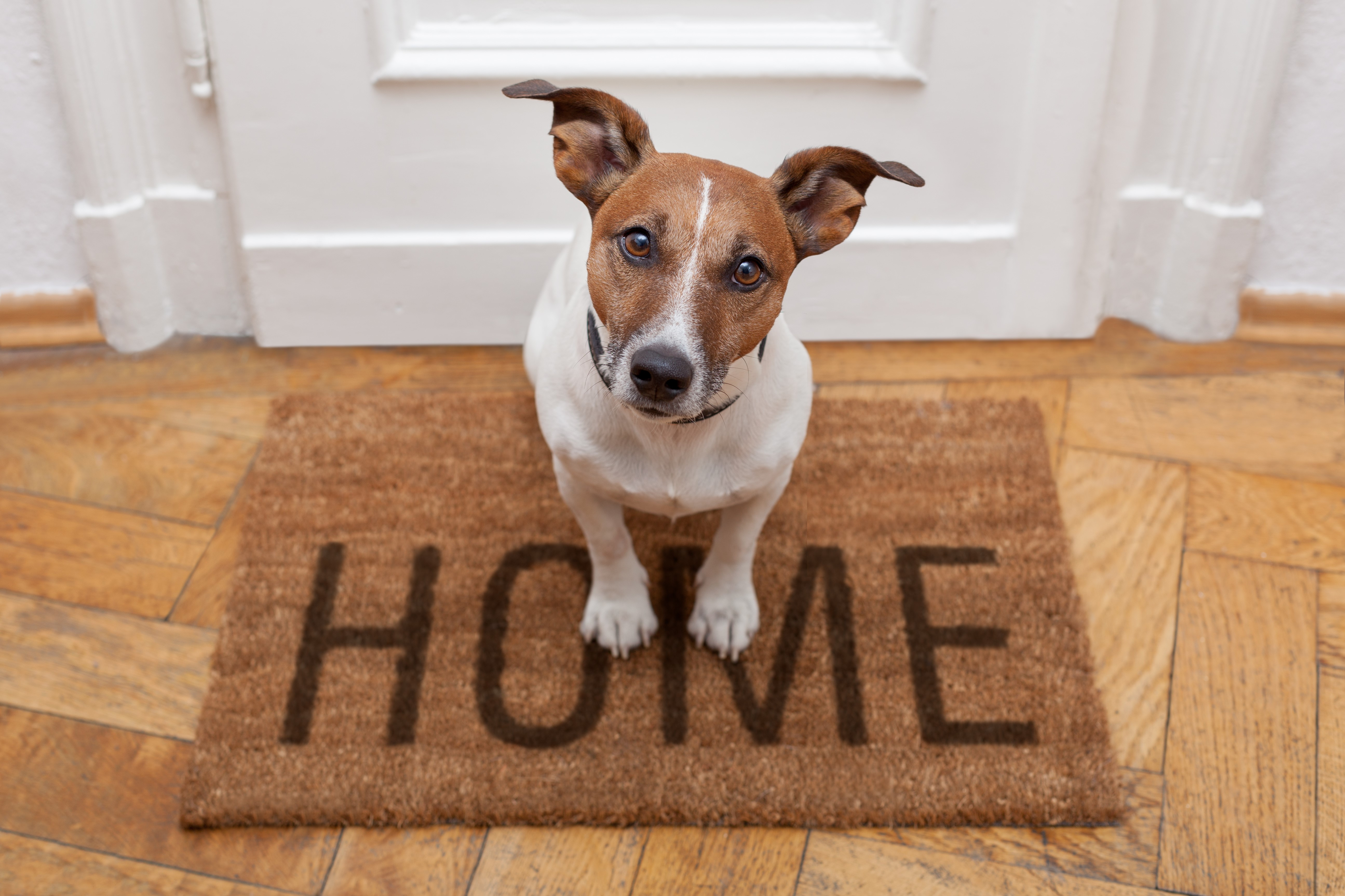 Animal welfare advice for rehoming your pets