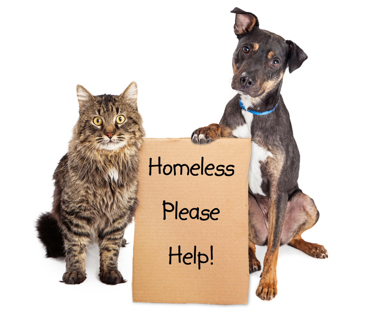 Donate to help us at the Animal Charity