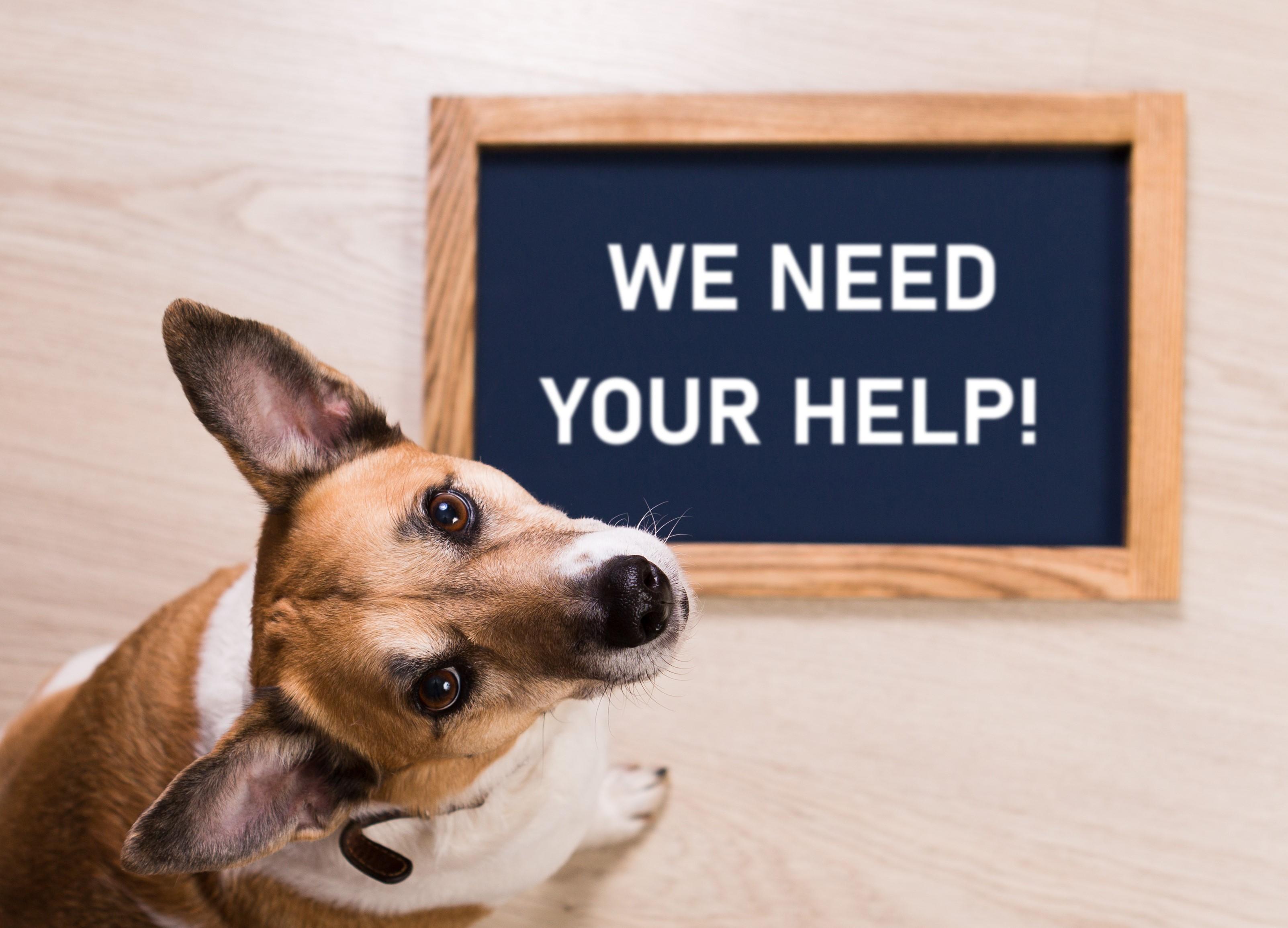 Donate to Warrington Animal Welfare