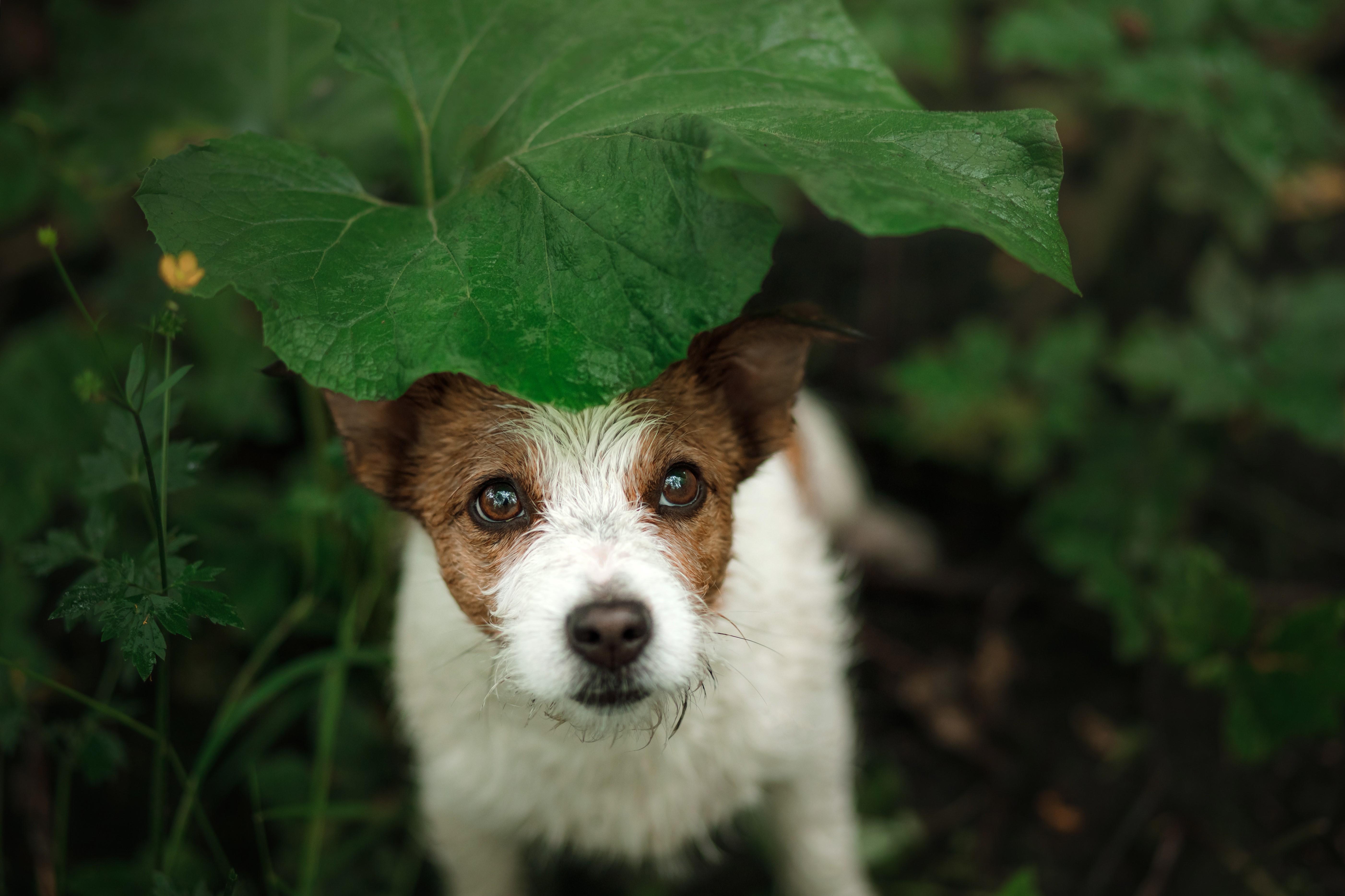 Help finding a lost dog Warrington Animal Welfare