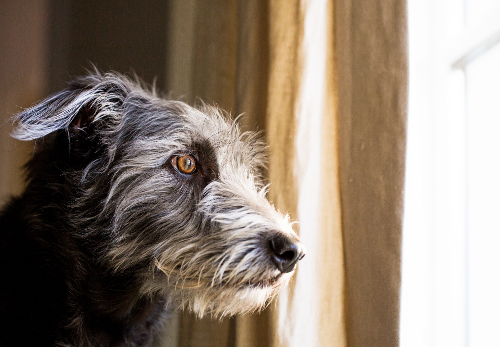 Animal welfare concerns of Covid-19