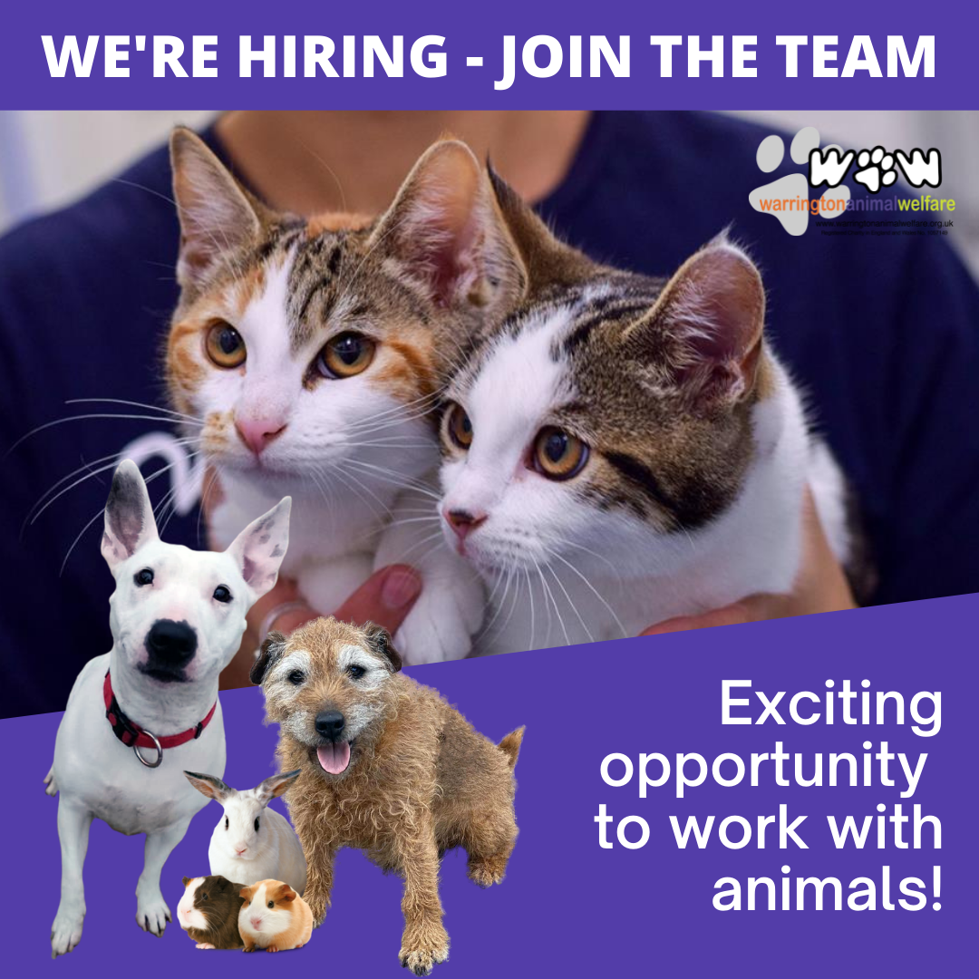 We're Hiring - Join the WAW Team
