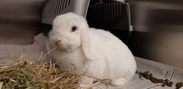 Animal welfare centre rabbit adoption Iris