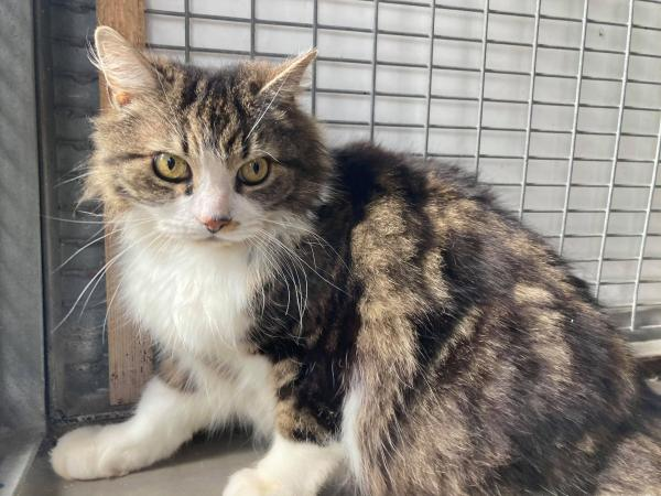 Cat Timmy is available for adoption at animal shelter