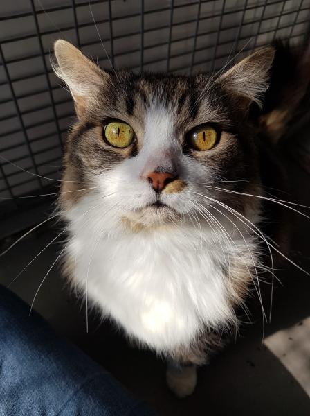 Adopt Timmy a cat at Warrington Animal Welfare