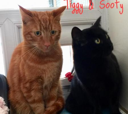Adopt cats Tiggy & Sooty from Warrington Animal Welfare