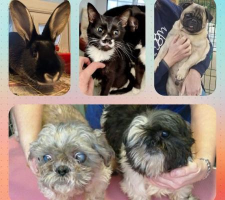 rescue rabbit, kitten, dogs