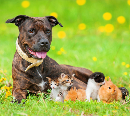 Neuter to reduce stray animals